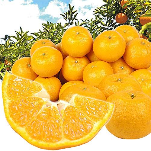 国華園 和歌山産 ポンカン 5�s 柑橘 果物