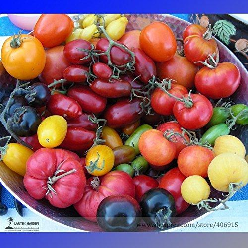 pinkdoseâ ® 2018 vente chaude cimelio mélangé Vinson watts tomate bio + graines hybrides, boîte professionnelle, 100/pack, comestible fruits savoureux e3158