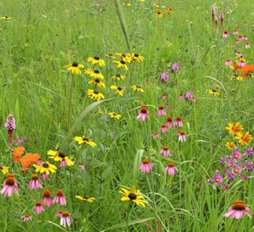 Wildflower Garden and Landscaping Mix (Mix 136), Seed Packet, True Native Seed (Northeastern US)