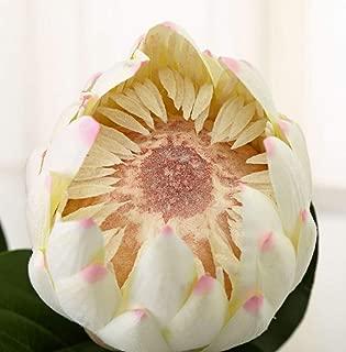 Skyseen 3PCS Artificial Protea Cynaroides Silk King Protea Flower for Floral Arrangements Home Party Wedding Decor(White)