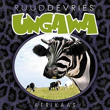 Afrikaas
