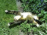 100 Stück Katze Minze Aromatische Pflanzen Katzenminze, Katzenminze Samen, Aromatische Pflanzen Kräutersamen für Garten Haustier beste Geschenk