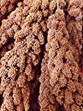 Bird-Box Kolbenhirse rot Frankreich Inhalt 1 kg