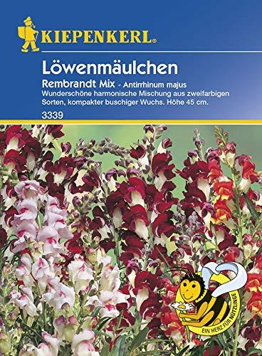 Blumensamen - Löwenmäulchen Rembrandt Mix von Kiepenkerl