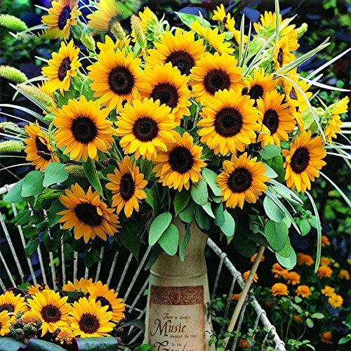 Hot Sale Rare Graines de tournesol Helianthus jaune Cut Organic Annuus Graines d'ornement Fleur Plante Bricolage Jardin Décoration 60PCS