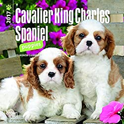 Cavalier King Charles Spaniel Puppies 2017 Calendar (多言語) カレンダー[Browntrout Publishers/Amazon]