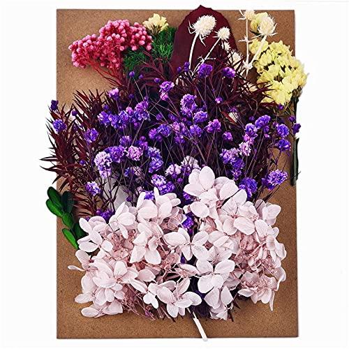 Kaxceay DIY Getrocknete Blume für Harzform, die echte Blume für Harz Füllungen Nail Art Home Handwerk Harz Casting Formwerkzeug (Color : 10)