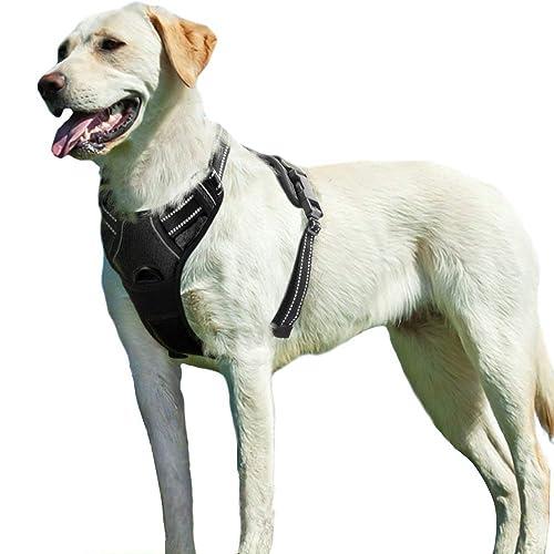 Leather Dog Harness: Amazon co uk