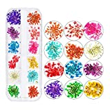 J TOHLO Nail décoration nail art décoration Diamant Décoration Strass art d'ongle pour nail art Cristal Mix Tailles cristaux Nail Strass Effacer pour accessoires (Fleurs séchées)