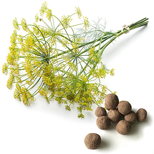 20 Dill Seed Balls (Long Island Mammoth)- Herb & Vegetable Seed Bombs to Make Gardening Fun and Simple!