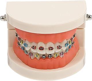 Healifty Dental Ortodontyczne Model Demonstracyjny Z Metalowym Uchwytem Standardowy Zęby Model Leczenia Typodont Nauczania...