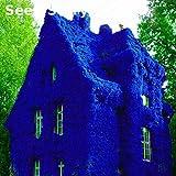Go Garden 100 Pcs Boston Blue Ivy Seeds Rare and Original Japanese Creeper S
