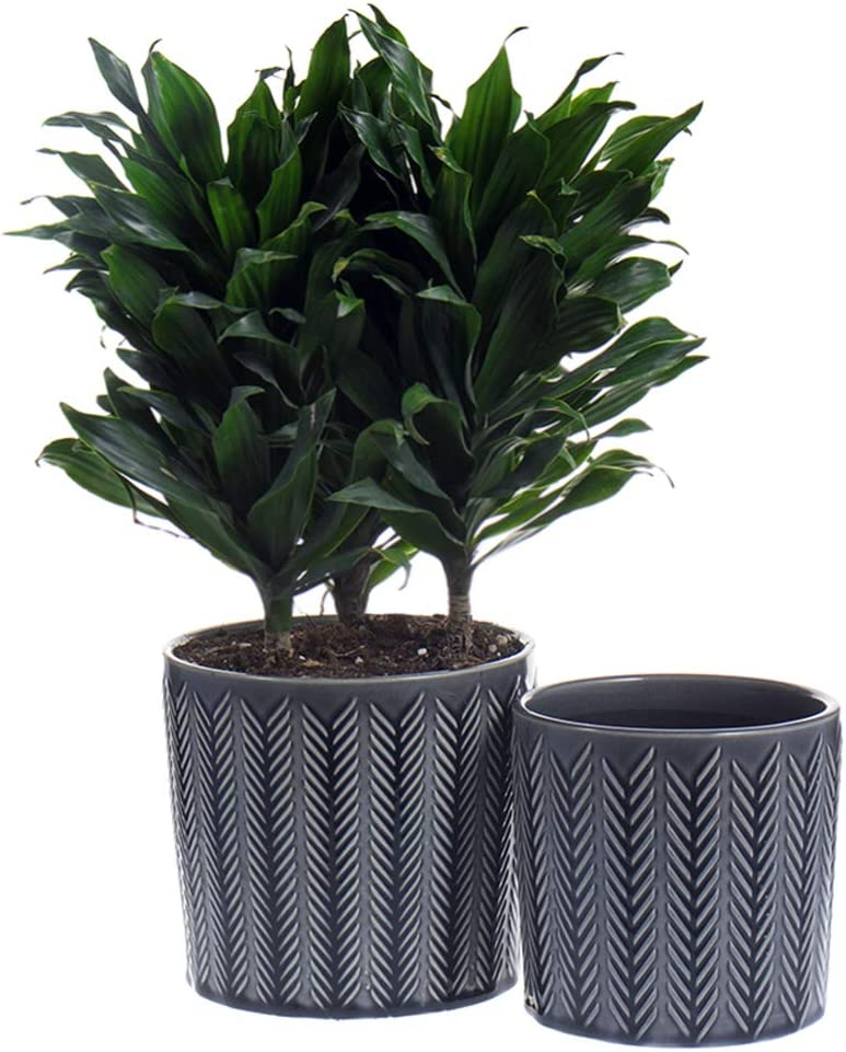 Medium Ceramic Max 88% OFF Flower Pots - Regular store 5.5 Plant 6.5 Inch and Planters Po