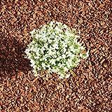 Terra-Discount Premium Pinie 600 Liter (10 x 60 Liter) mittel, Körnung 8-15 mm, Pinienrinde,...