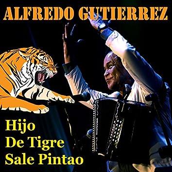 Hijo de Tigre Sale Pintao