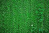 Fondo de fotografía de Fiesta en la Selva Follaje de Hierba Pantalla Verde Fotografía de Boda Estudio fotográfico Photocall Photo Prop A8 9x6ft / 2.7x1.8m