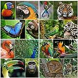 Set de postales de 16 animales exóticos (16 tarjetas postales diferentes con animales para coleccionista/postcrossing o como material educativo para biología de Edición Colibri.