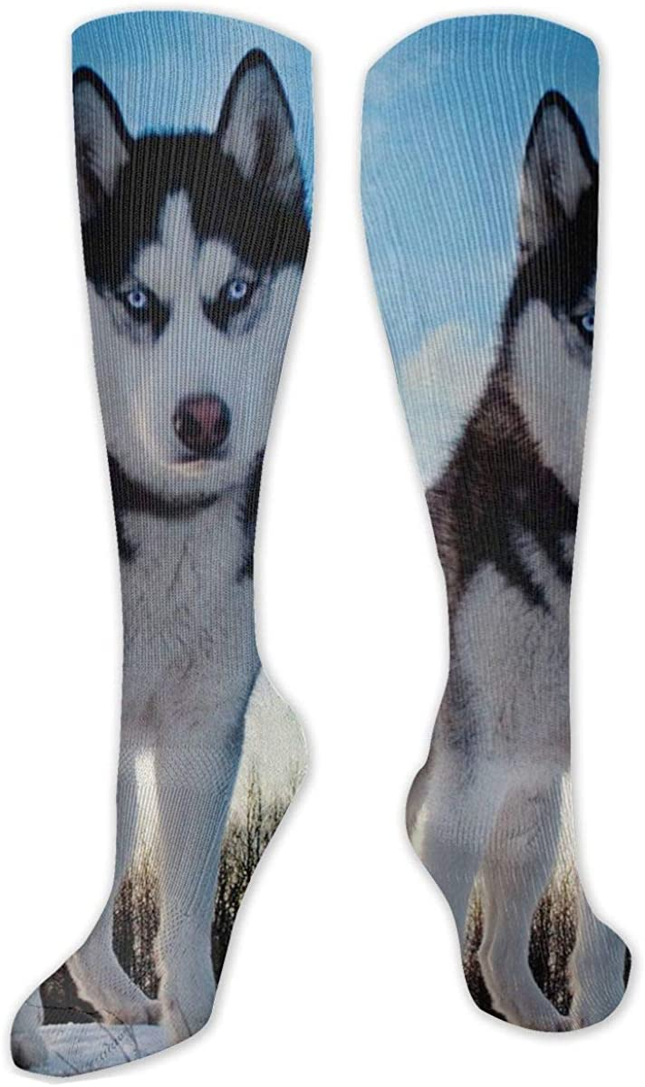 Husky Dog Staring At You Knee High Socks Leg Warmer Dresses Long Boot Stockings For Womens Cosplay Daily Wear