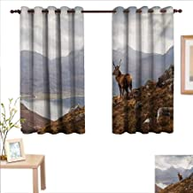 Deer Customized Curtains Wild Stag Overlooking Loch Torridon and Dramatic Western Ross Mountain Nature View 55