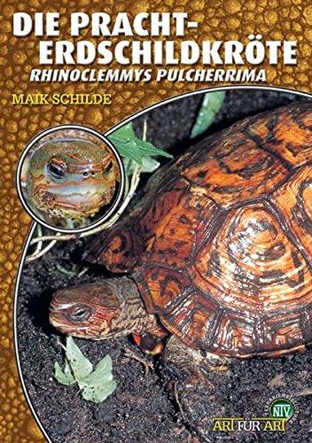 Die Pracht-Erdschildkröte: Rhinoclemmys pulcherrima (Art für Art: Terraristik)