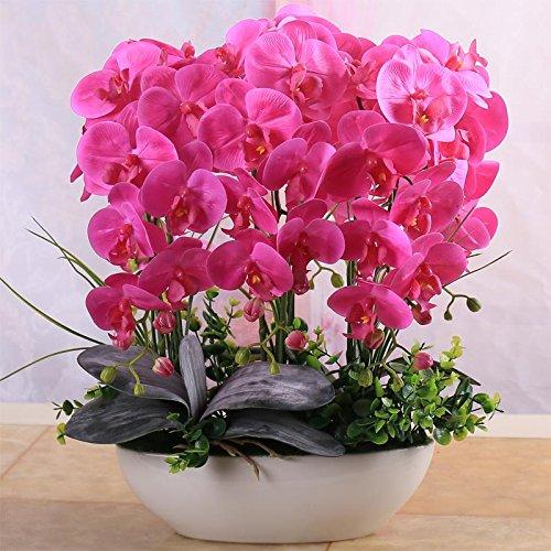 100 Pcs Belle Phalaenopsis Seeds Suite Salon Intérieur Décoration Fleurs en pot