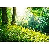 Fototapete Wald - ALLE WALDMOTIVE auf einen Blick ! Vlies