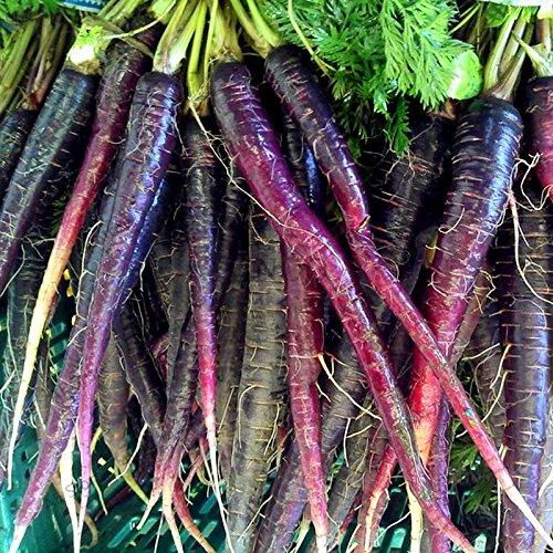 100pcs/sac graines de carotte, graines de légumes de fruits sucrés, plusieurs espèces à choisir, pour la plantation de jardin à domicile 4