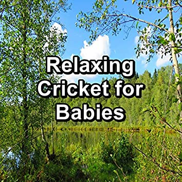Relaxing Cricket for Babies