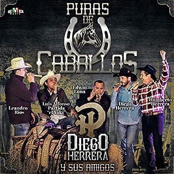 Diego Herrera y Sus Amigos - Puras de Caballos