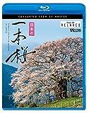 日本の一本桜 4K撮影作品 【Blu-ray Disc】
