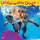 Underwater Dogs 2022 12 x 12 Inch Monthly Square Wall Calendar, Pet Humor Puppy