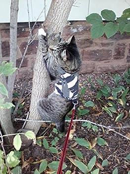 Mynwood Cat Jacket/Harnais Arctic Combat pour Chats Adultes–évasion Preuve