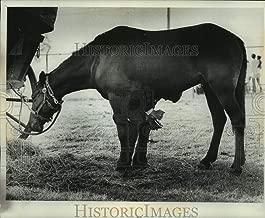 1976 Press Photo Man cleans horse's hoof at Bicentennial Wagon Train encampment