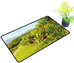 gmnalahome Extra Thick Door Mat Orange Groves Mountain Backdrop Orange orchar Orange Tree Soak Up Water and Dirt W23 x H17 INCH