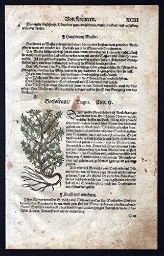 Bockskraut Portulak herbal Kräuter Kräuterbuch Lonicer Holzschnitt
