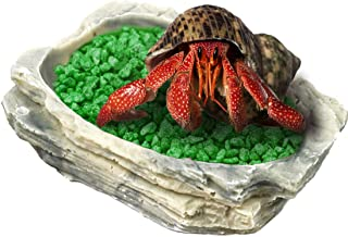 SunGrow Hermit Crab Feeding Bowl - Keeps Crabitat Mess-Free - Durable, Attractive, Multifunctional Decor - Serve as Climbing Toy or Drinking Bowl, Swimming Pool and Much More