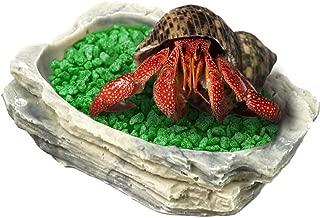 Best hermit crab food bowl Reviews