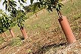PAMPOLS Protectores Tronco de Árbol y Arbusto Joven en Tubo de Plástico Rígido con Autocierre Reutilizables, Control de Roedores para Frutales de 35cm, Pack de 40 Unidades Individuales