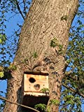 Squirrel Houses. Nesting Box. 1 EA. for Squirrel RE-Habe and Out Side USE.Fast 2 nd Work Day Shipping. Made. ONLY BYU.S.A. VETS.Orders Sprayed with Bleach 2 SANITIZE Before Shipment