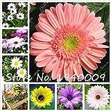 Generic Fresh 50pcs Gerbera SEMILLAS de flores para plantar Color mixto 3