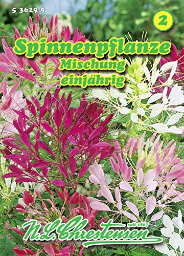 Cleome spinosa, Spinnenpflanze, Mischung N.L.Chrestensen Samen 536299-B