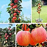 Queind 20pcs/ Bag Mini Tree Seeds Garden Yard Bonsai Fruit Plant