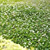Outsidepride White Dutch Clover Seed: Nitro-Coated, Inoculated - 5 LBS #1