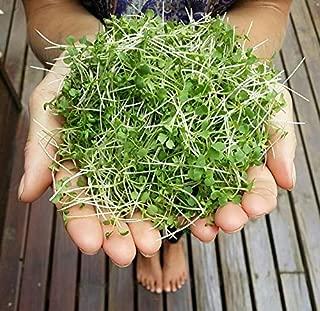 Alyf Market Mustard Microgreens Seed - Wasabi (Brassica juncea) Bred Especially for microgreen (1 oz Pack)