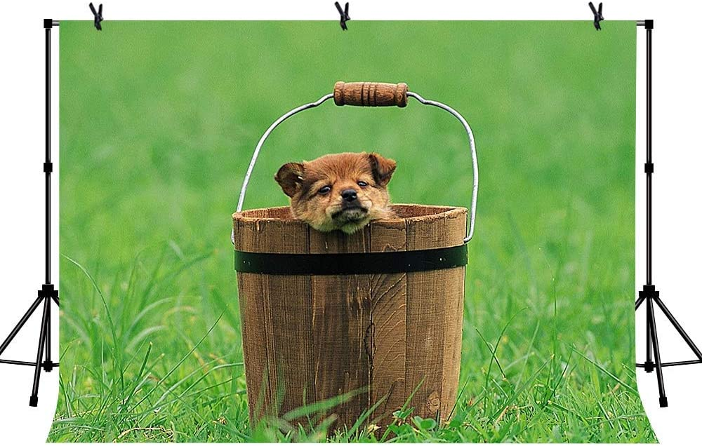 10x6.5ft Vinyl Brown Puppy Background Cute Brown Puppy in Brown Hand Bucket Green Lawn for Cute Pet Photography Pet Party Background LY232 for Party Decoration Birthday YouTube Videos School Photoshoo