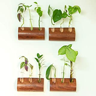 Lazy Gardener Glass Tube Wall Hanging Planter with Wooden Stand | Hydroponic Planter for Home Decor (Pack of 4)