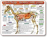 Equine Design-The Horse's Body Systems - A Double-Sided, Laminated, Horse Anatomy Chart: A Learning and Teaching Chart