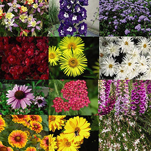 Perennial Pack Collection , Plug Plants, Garden Plants, x 36 Plug Plants by Thompson and Morgan