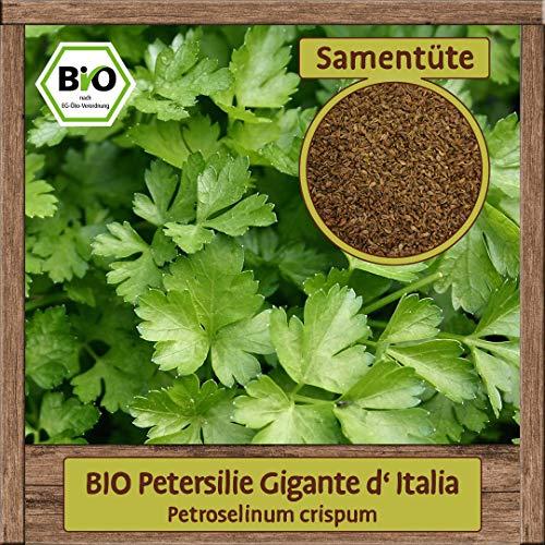 BIO Petersilie Samen Sorte Gigante D'Italia galtte italienische Blattpetersilie Kräutersamen