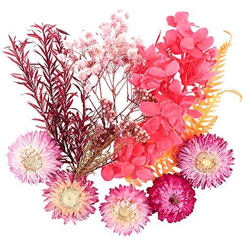 Flores Secas Manualidades Resina flores secas  Marca UFLF